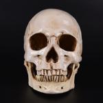 life size skull aliexpress
